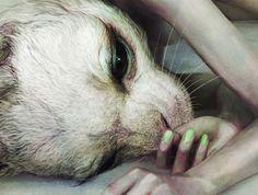 realistic rabbit illustration - Google Search