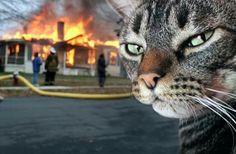 falou que não gostava de gatos, não fala mais #canseidesergato