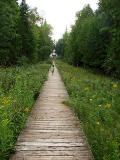 Nature walk in Ridges Sanctuary, Door County, WI, USA