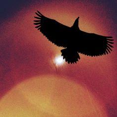 Сор, как орел