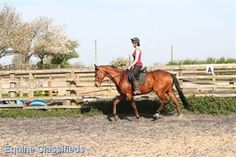 Harry - 16.2hh bright bay thoroughbred http://www.lardidar.co.uk/Horse/162hh-bright-bay-thoroughbred-listing-105.aspx#.Ujr8G1OAUfQ