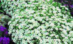 Bilde av FJØRKOLL Foliage, Plants, White Flowers, Front Yard, Flowers, Planters, Oregon Garden, Garden Pool, Garden