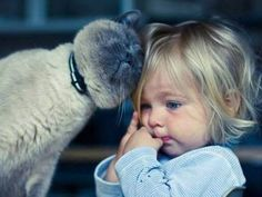 Los gatos aman a los niños - Cat gives kid great compassion Crazy Cat Lady, Crazy Cats, Siamese Cats, Cats And Kittens, Animals For Kids, Cute Animals, Baby Animals, Kind Photo, Photo Chat