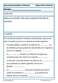 Fichas Conocimiento del Medio Cuarto de Primaria | naturales y ...