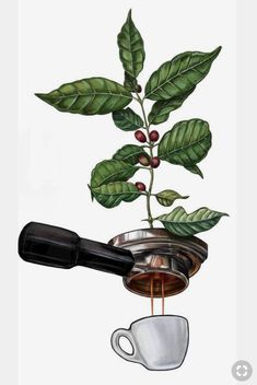 Most Simple Tips and Tricks: Coffee Drawing Eyes coffee tree diy.Caramel Coffee Creamer coffee sayings java. Coffee Drawing, Coffee Painting, Coffee Logo, Coffee Barista, Coffee Creamer, Espresso Coffee, Coffee Shops, Black Coffee, Image Digital
