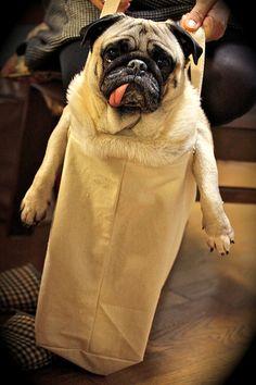doggy bag  ❥ http://pinterest.com/martablasco/