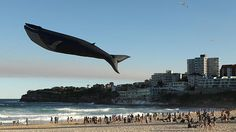 Funny pictures about Giant Blue Whale Kite. Oh, and cool pics about Giant Blue Whale Kite. Also, Giant Blue Whale Kite. Go Fly A Kite, Kite Flying, Peter Lynn Kites, Largest Animal On Earth, Foto Real, Pokemon, Bondi Beach, Blue Whale, Humpback Whale