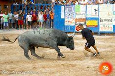 torodigital: Plantador el toro de Victorino Martín más esperad...