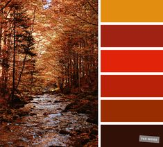 59 Pretty Autumn Color Schemes { Burnt orange + Brown } - - Pretty Autumn Colour Schemes { Brown + Burnt orange } A pretty colour palette. To get you started on your own palette, we've created over. Office Color Schemes, Orange Color Schemes, Orange Color Palettes, Color Schemes Colour Palettes, Brown Color Schemes, Red Colour Palette, House Color Schemes, Burnt Orange Color, Bedroom Color Schemes