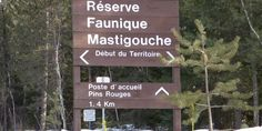 Réserve faunique de Mastigouche Reserve, Canada, Nature, Welcome Post, Switzerland, Travel, Naturaleza, Nature Illustration, Scenery