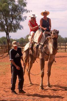 a tourist camel ride, Alice Springs