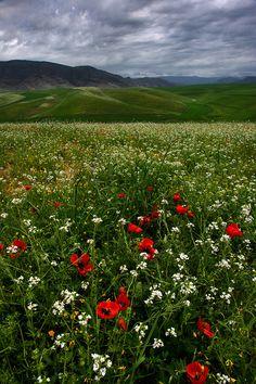 Primavera florida no Uzbequistão.