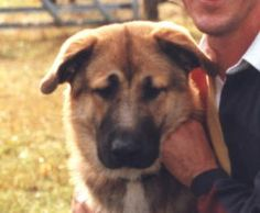 For the record my dream dog is a: German Shepherd Great Pyrenees Mix
