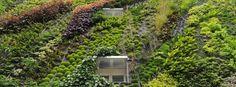 Jardins Verticais. Reconectando os habitantes de áreas urbanas com o verde.