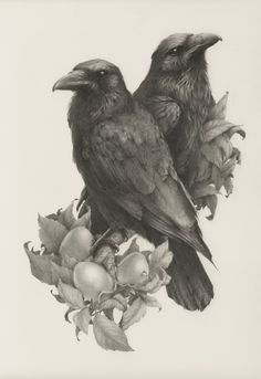 Self-employed artist Vanessa Foley has created the collection of awesome realistic sketches of birds below. She is currently based in Newcastle, England and her work has been featured in galleries in America, New Zealand and the UK. Crow Art, Raven Art, Bird Art, Owl Bird, Bird Drawings, Animal Drawings, Hugin Munin Tattoo, Realistic Sketch, Realistic Bird Tattoo