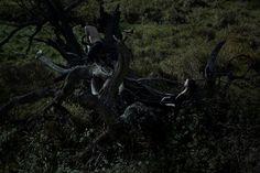 kamila-nora-netik-15  A dark perspective on Northern nature by Kamila Nora Netikova (bleaq.com)