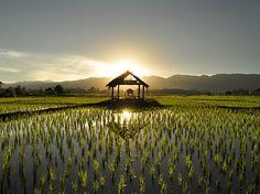 O fotógrafo Edson Walker já viajou por 35 países, o que lhe permitiu acumular 24 mil fotografias e quatro passagens pela polícia. Na imagem, plantação de arroz no #Laos.