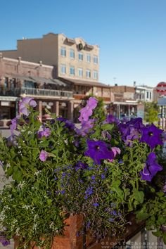 """Flowers in Downtown Truckee - These flowers and old buildings were photographed along commercial row in historic Downtown Truckee, California. Truckee California, Railroad History, Sierra, Old Buildings, Lake Tahoe, Small Towns, The Row, Commercial, Shots"
