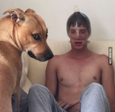 I can't think of the right word to describe the dogs expression... shame, disgust, contempt?