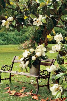 "What I LOVE the most about the South-Magnolia - The South's Most Iconic Flowers - Southernliving. When the sweet fragrance of magnolia fills the air, you know you're in the South. To many people, the word ""magnolia"" is synonymous with our native Magnolia grandiflora, the classic Southern magnolia with large, glossy leaves, and huge, fragrant white blossoms—the state flower of Mississippi and Louisiana."