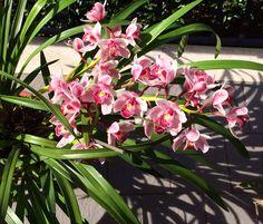 My Orchidee