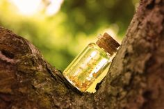 Fortune potion by GloomySisterhood on DeviantArt Message In A Bottle, Bird Feeders, Deviantart, Outdoor Decor, Magic, Nature, The Body, The Great Outdoors, Teacup Bird Feeders
