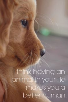And an animal will become your best friend