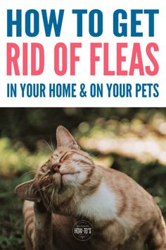 How to Get Rid of Fleas Naturally - Tips to kill fleas in your home and a natural flea control spray for your dog or cat. Natural Flea Killer, Natural Flea Spray, Natural Flea Control, Flea Spray For House, Flea In House, Flea Spray For Cats, Flea Powder For Cats, Kill Fleas In House, Kill Fleas On Dogs