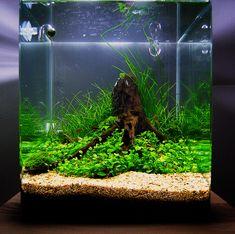 117 best hobbies aquascaping images planted aquarium rh pinterest com