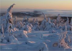 """""""Heavy snowfalls at the beginning of winter, followed by intense cold snaps, allow heavy crusts of ice layers to gradually build on the pine and birch,"""" says Frozen Planet researcher Fredi Devas."""