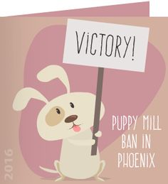 In a victory for dogs and for critics of puppy mills, an ordinance banning the sale of dogs and cats from commercial breeders in Phoenix, Arizona pet stores, is here to stay. Read More. Thank you for being part of Care2 - the world's largest community for good!