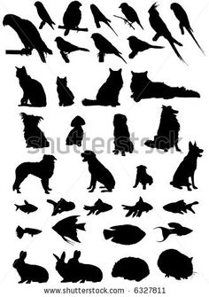 Animal silouette