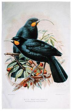 Huia Bird of NZ Tea Towel. A stunning Tea Towel that features the Huia bird of New Zealand. New Zealand Tattoo, New Zealand Art, Bird Illustration, Botanical Illustration, Flower Tattoo Foot, Flower Tattoos, Maori Patterns, Fairy Tattoo Designs, Maori Designs