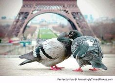 Paris… is for every kinda lovers. Even pigeons know where to show compassion~