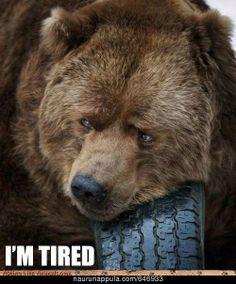 I'm Tired. - hauskat kuvat - Naurunappula