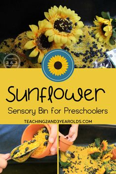 This preschool sunflower sensory bin is easy to make using dyed rice, terra cotta pots, and pretend sunflowers. Perfect during the fall while harvesting real sunflowers! Fall Activities For Toddlers, 3 Year Old Activities, Autumn Activities, Preschool Curriculum Free, Preschool Garden, Preschool Classroom, Fall Sensory Bin, Sensory Table, Sensory Diet