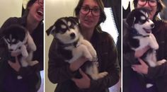 This Husky Puppy Sounds Like A Baby Trying To Talk And It's Adorable.