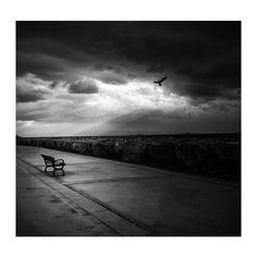 Black and White photography - Art photography  Fine Art  Photography Print Black Decor Alone  Birds  Wall Art Sky print 12x12 inch
