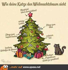 Weihnachtsbaum aus Katzensicht   Lustige Bilder auf Spass.net