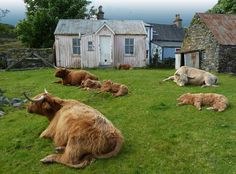 """Another """"busy"""" carefree day at Duirinish, Plockton, Scotland 