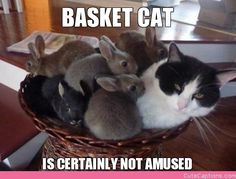 Basket Cat, is Certainly Not Amused
