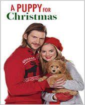 Noel Köpeği izle, Noel Köpeği hd izle, Noel Köpeği filmi izle, A Puppy for Christmas 2016