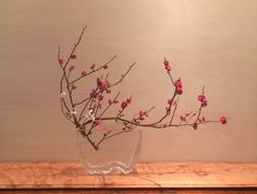 Ikebana Flower Arrangement, Flower Arrangements Simple, Orchid Arrangements, Bonsai, Silk Flowers, Beautiful Flowers, Zen Tea, Zen Style, Japanese Flowers