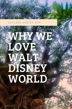 Walt Disney World- the happiest place on Earth, and one of my favourite places to go. Find the 8 favourite things I love about Walt Disney World and why you should start palling your trip now! Florida Travel, Us Travel, Walt Disney World, Along The Way, Places To See, Orlando, Earth, Explore, My Love