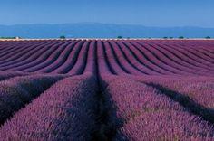 Zo'n lijnenspel lukt niet in onze tuin, maar natuurlijk bloeit er wel lavendel aan de Haven