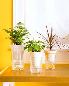 This is a great idea for classroom plants! You could leave them over breaks and not have to worry about watering them.