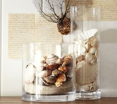 Beach shell vase filler c