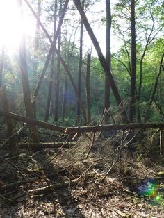 Whipple Dam State Park, Rothrock State Forest, Centre County by Shawna Robertson