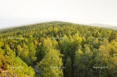 Panoramic view of mountain forest © Anton Zagorulko