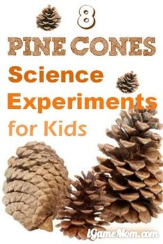 8 amazing pine cone science experiments for kids - easy to do at home, learn about pine cones and practice research skills #LearnActivities